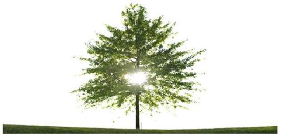 albero fotografia  stenopeica
